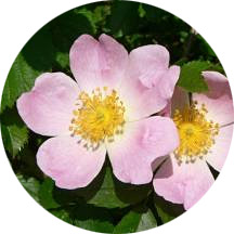 Bach-Flower-Remedies