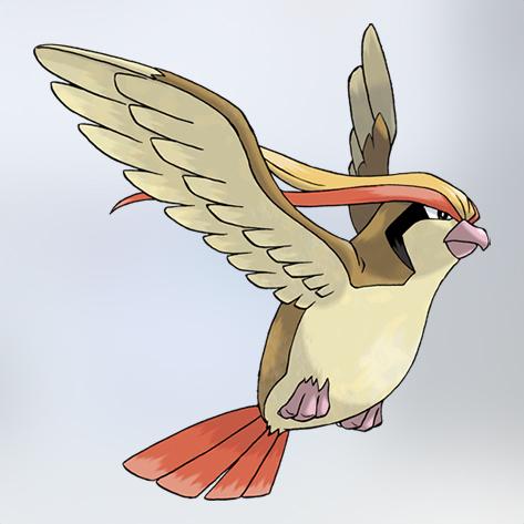 pidgeot zigos