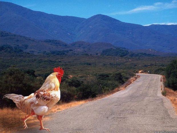Απαντήσεις σε υποθετικό ερώτημα.Γιατί διέσχισε το δρόμο το κοτόπουλο;