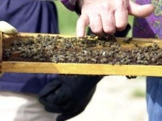 Χιλιάδες έντομα στη Ρόδο