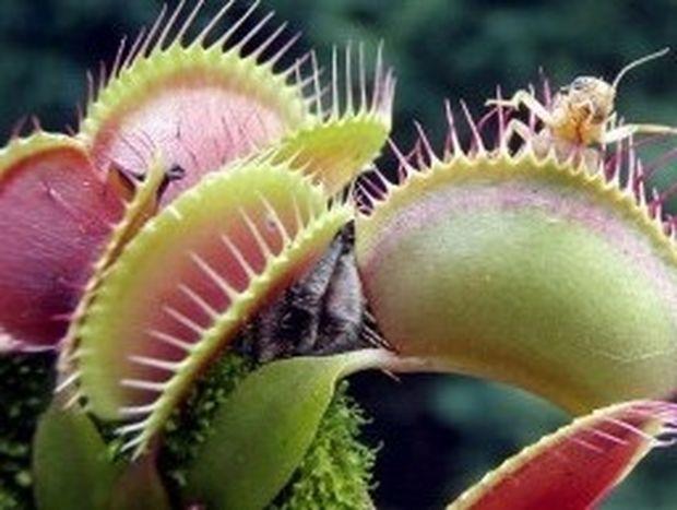 Το φυτό-φονιά φοβούνται οι Αμερικάνοι!