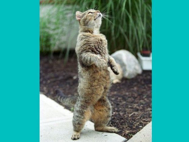 Εκπαιδεύονται οι γάτες;