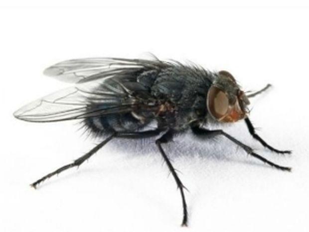 Πως μια μύγα έχει κάνει… έξαλλους όλους τους χρήστες του Facebook! (pic)