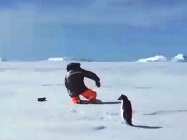 Άνδρας VS πιγκουϊνάκι 0 -1