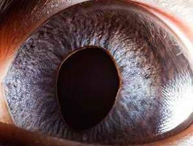 Τα μάτια των ζώων