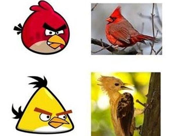 Δείτε τα πραγματικά Angry Birds (pics)