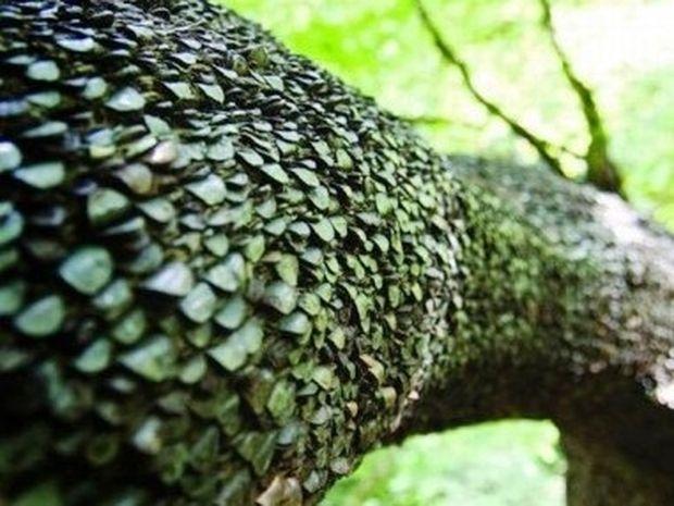 Δέντρα με καρπούς κέρματα