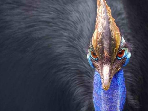 Το πουλί… δολοφόνος
