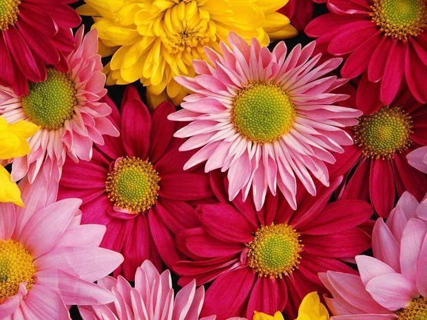 Όμορφα μου λουλούδια!
