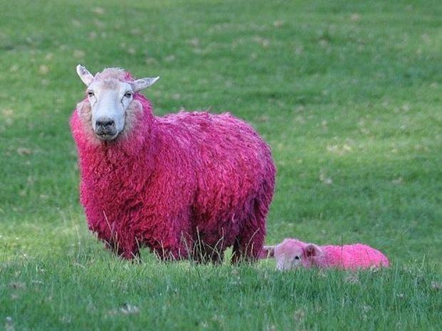 Πράσινα άλογα και… ροζ πρόβατα!