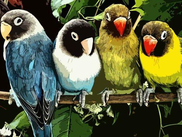 Κώστας Χαρδαβέλλας: Οι παπαγάλοι του χάους