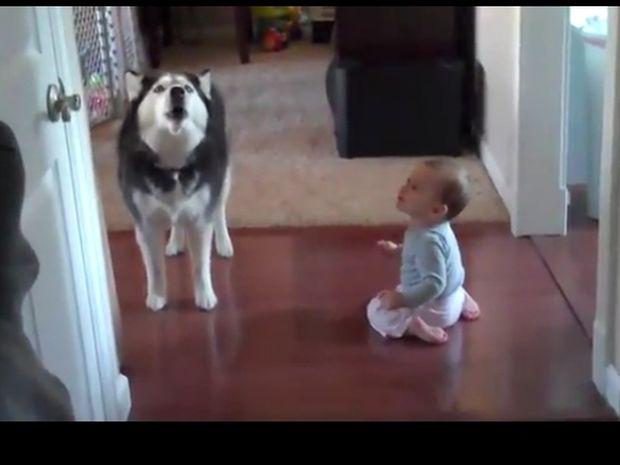Η απίστευτη συνομιλία ενός μωρού με ένα Χάσκι! (βίντεο)