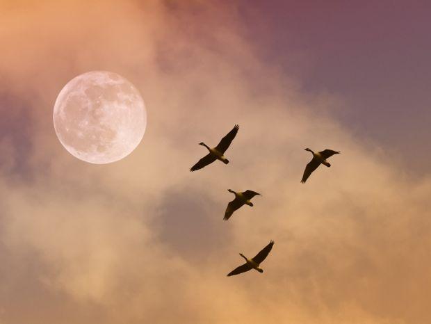Έκλειψη Σελήνης και Πανσέληνος Ιουνίου – Πώς θα επηρεάσει τα 12 ζώδια;