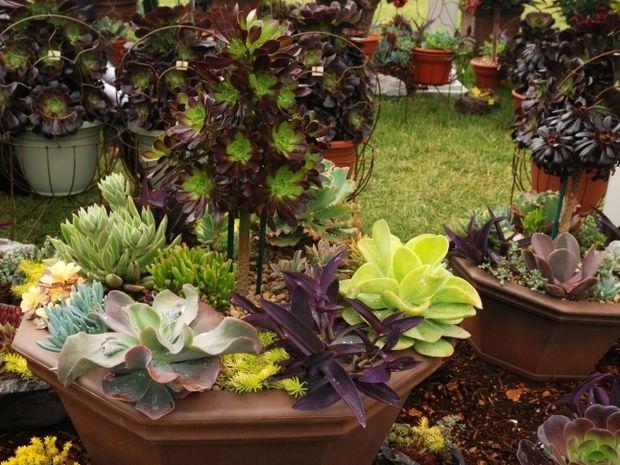 Αστρολογικό Φενγκ Σούι - Φροντίστε τα φυτά και τον κήπο σας με πυξίδα τα άστρα