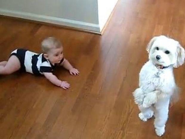 Βίντεο: Όταν ο σκύλος χορεύει… το μωρό τι κάνει;
