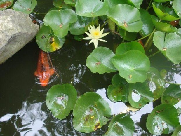 Ανθοΐαμα Rock Water: Αφεθείτε στη ροή της ζωής