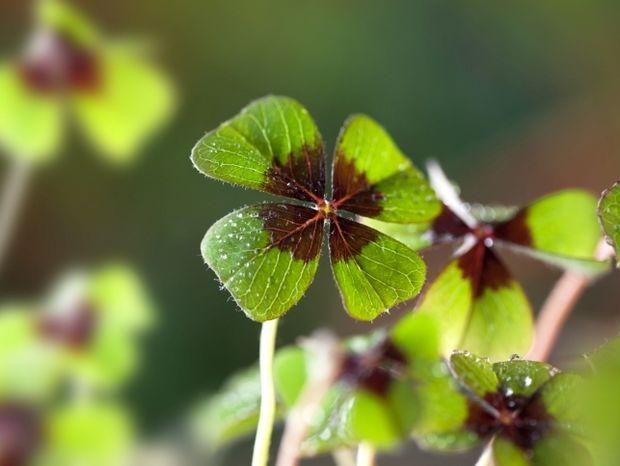 Οι 12 τυχερές στιγμές της ημέρας: Παρασκευή 1η Μαρτίου