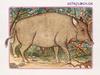 Ζώδια Κινέζικης Αστρολογίας: Ο Χοίρος