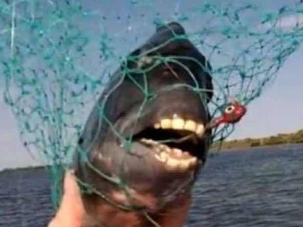 Έπαθε ΣΟΚ: Έπιασε ψάρι με ανθρώπινα δόντια!