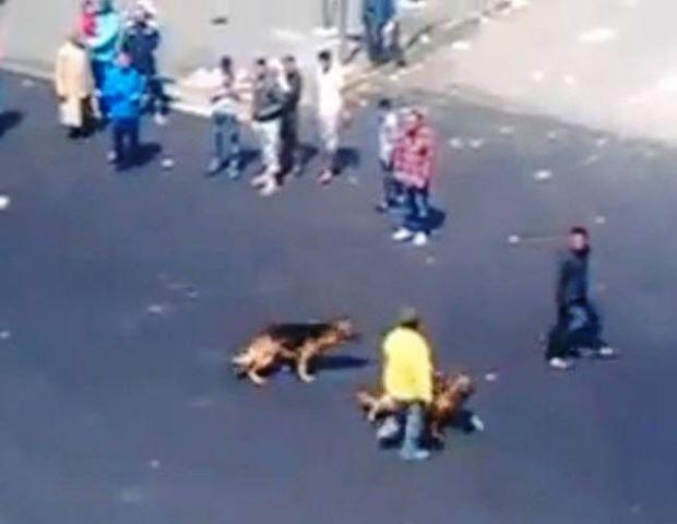 Βίντεο: Ποτέ μην τα βάζεις με σκυλιά...