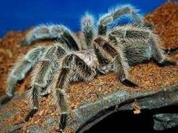 Ζώα με μυστηριώδεις ουσίες - Απίθανα γιατρικά της άγριας φύσης!