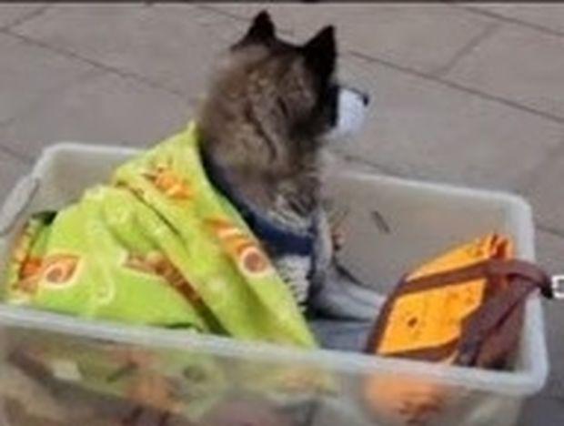 ΣΥΓΚΙΝΗΤΙΚΟ VIDEO: Τι σκαρφίστηκε ένας Ιάπωνας για να βοηθήσει το γέρικο σκυλί του