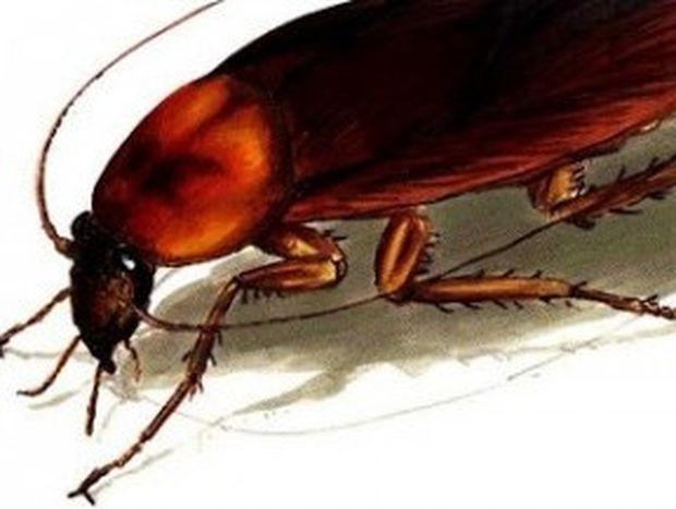 ΑΠΙΣΤΕΥΤΟ: Δείτε με ποιόν φυσικό τρόπο μπορείτε να εξαφανίσετε τις κατσαρίδες