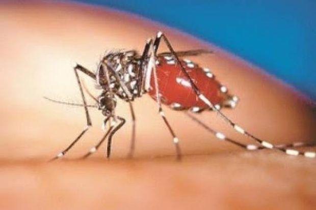 Δέκα παράξενα στοιχεία για τα κουνούπια!