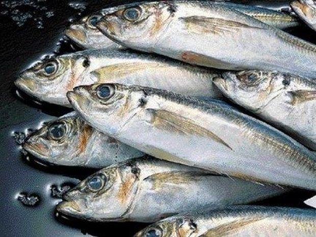 Τι ΠΡΕΠΕΙ να προσέχουμε στα ψάρια που αγοράζουμε για να βεβαιωθούμε ότι είναι ΦΡΕΣΚΑ;