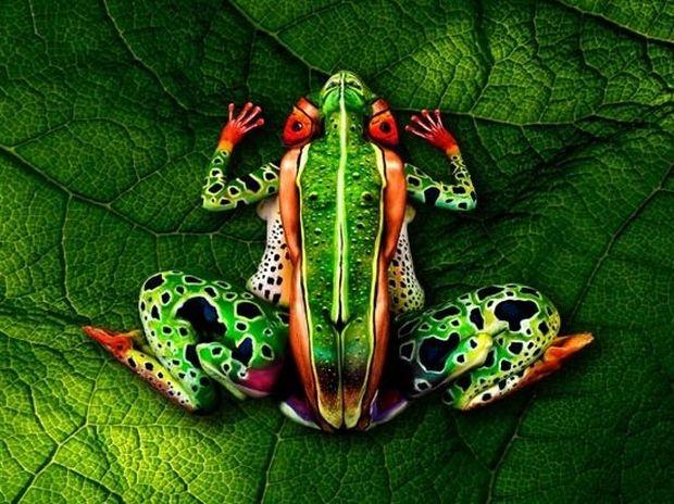 ΔΕΙΤΕ: Βλέπετε έναν βάτραχο; Κοιτάξτε καλύτερα!
