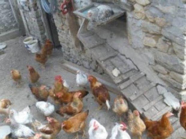 Ναυπακτία: Πήγε να μαζέψει τα αυγά και της «κόπηκαν» τα πόδια (pic)