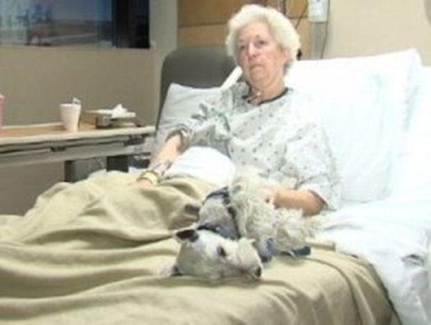Συγκλονιστικό: O σκύλος της την έσωσε από το θάνατο!