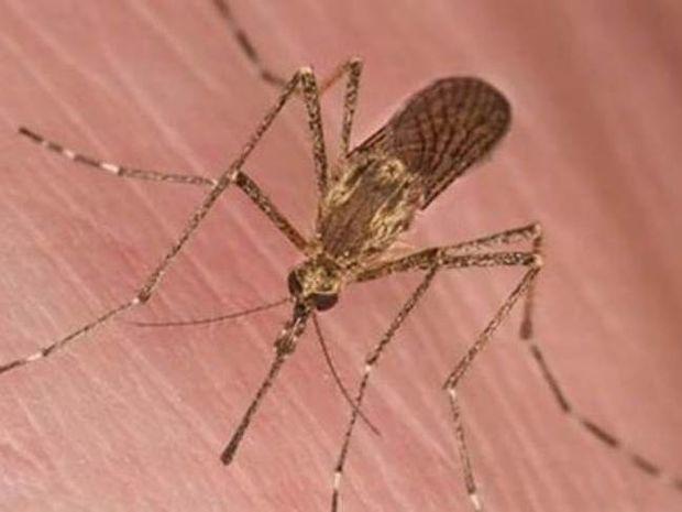 Δείτε για ποιο λόγο σας προτιμούν τα κουνούπια