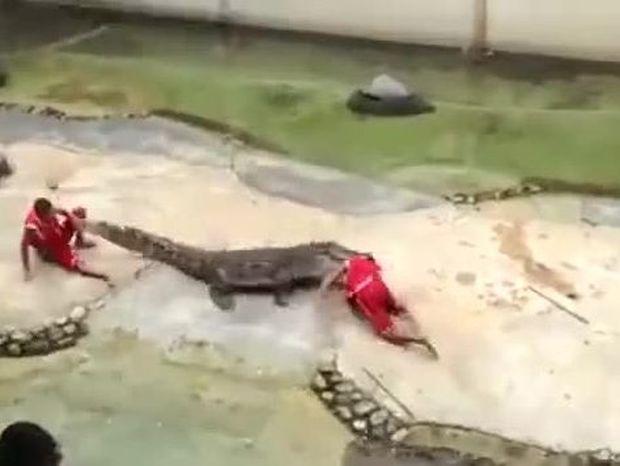 VIDEO- ΣΟΚ: Πιάστηκε στα σαγόνια του κροκόδειλου και σώθηκε από θαύμα!