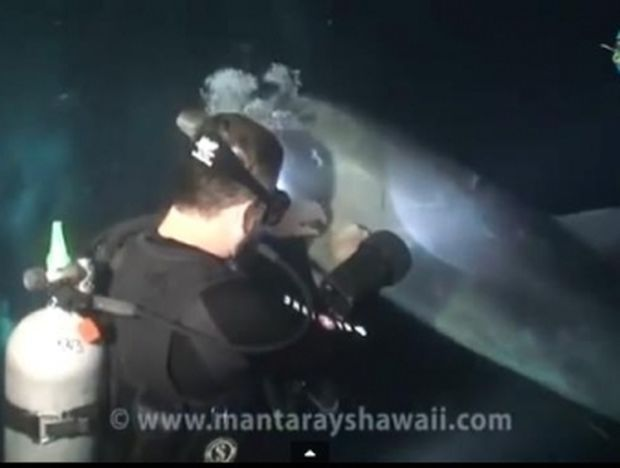 Απίστευτο! Παγιδευμένο Δελφίνι ζητάει από δύτη να το σώσει