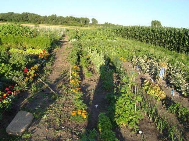 Ξάνθη: Πότιζε τον κήπο του όταν αντίκρισε... τον «γίγαντα»