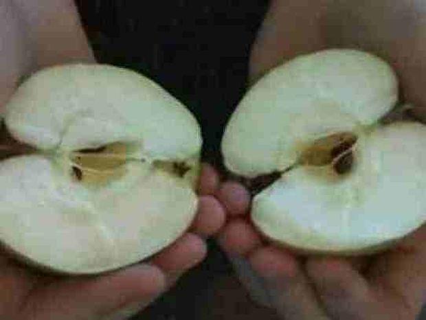 Βίντεο: Πώς να κόψεις ένα μήλο με τα χέρια