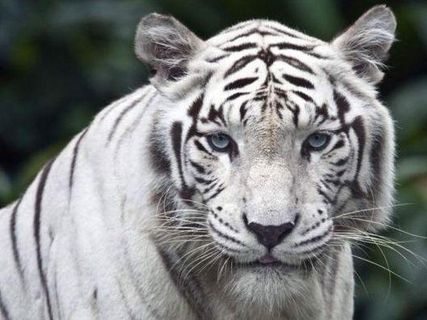 Υπέροχα ζώα σε χρώμα λευκό!