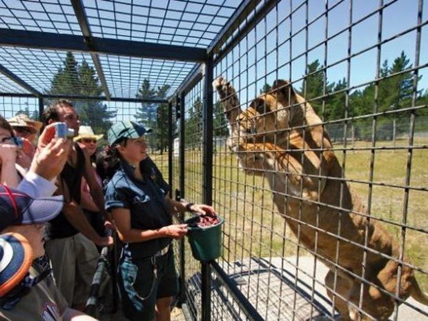 ΑΠΙΘΑΝΕΣ ΕΙΚΟΝΕΣ ΚΑΙ VIDEO: Πάρκο άγριας ζωής βάζει τους… τουρίστες σε κλουβί!