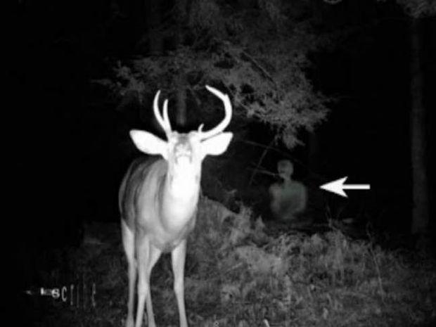 Βίντεο: Περίεργο πλάσμα εμφανίστηκε σε εθνικό πάρκο