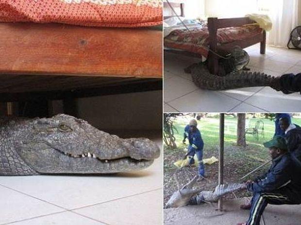 Απόλυτος τρόμος: Πάγωσε όταν βρήκε κάτω από το κρεββάτι του...