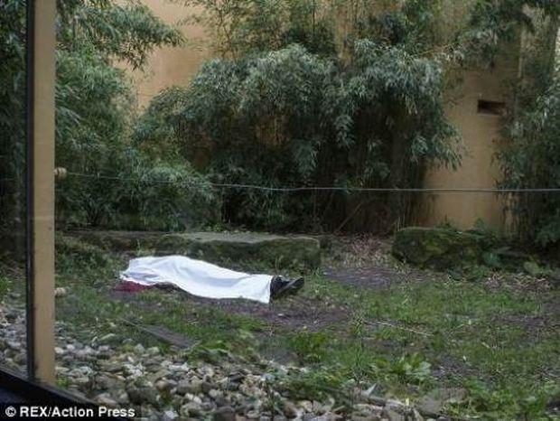 Τίγρης κατασπάραξε υπάλληλο ζωολογικού κήπου μπροστά στους επισκέπτες