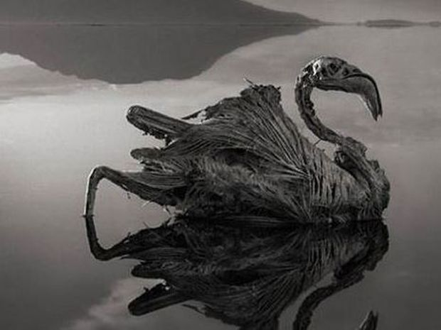 Νάτρον: Η θανάσιμη λίμνη που ότι ακουμπήσει το μετατρέπει σε... στήλη άλατος!!!