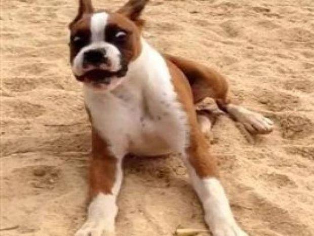 Ξεκαρδιστικό βίντεο: Σκύλος δοκιμάζει λεμόνι και...