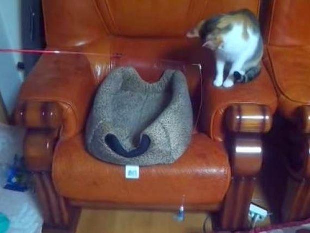ΑΠΙΘΑΝΟ: Το καλύτερο βίντεο με γάτες στην ιστορία!