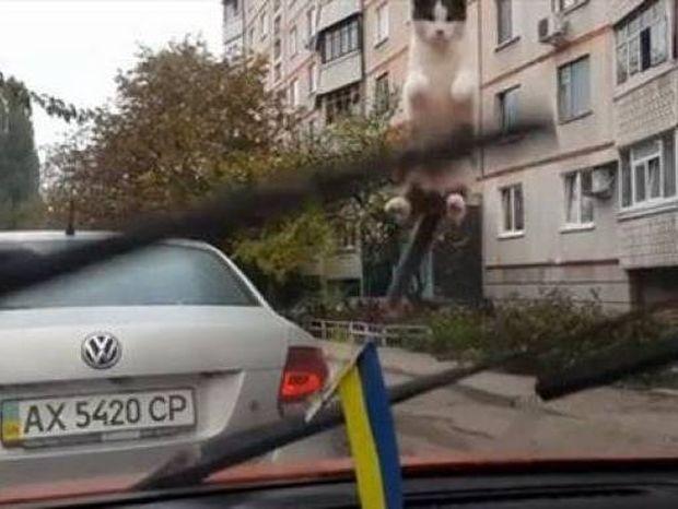 Το βίντεο που σαρώνει: Η περίεργεια... εκτόξευσε τη γάτα!