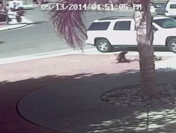 Απίστευτο βίντεο: Γάτα-ήρωας σώζει αγοράκι από επίθεση σκύλου!