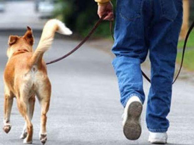 Ο σκύλος σας κάνει καλό στην υγεία σας. Διαβάστε το γιατί