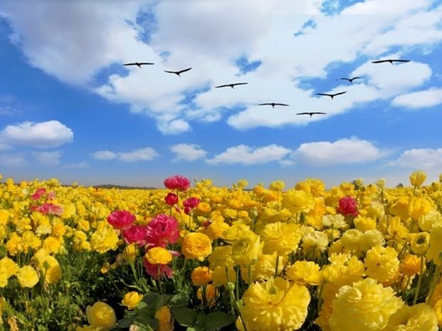 Οι τυχερές και όμορφες στιγμές της ημέρας: Κυριακή 1 Ιουνίου