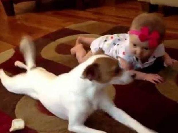 Σκύλος δείχνει σε μωρό πως να μπουσουλάει (Video)
